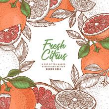 Grapefruit Design Template. Engraved Style Illustration. Vector Illustration