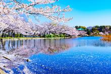 Spring Ueno Park In Tokyo Japan