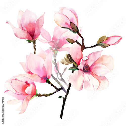Foto auf AluDibond Magnolie Beautiful lovely tender herbal wonderful floral summer bouquet of a pink Japanese magnolia flowers watercolor hand illustration. Perfect for textile, wallpapers, invitation, wrapping paper, phone case