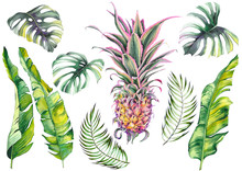 Tropical Set With A Pink Pineapple, Banana Leaves And Monstera Leaves. Watercolor On White Background. Isolated Elements For Design.