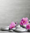 Purple flower and stone zen spa on grey background