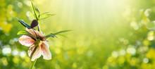 Helleborus Orientalis Or Lenten Rose Plant Spring Horizontal Background