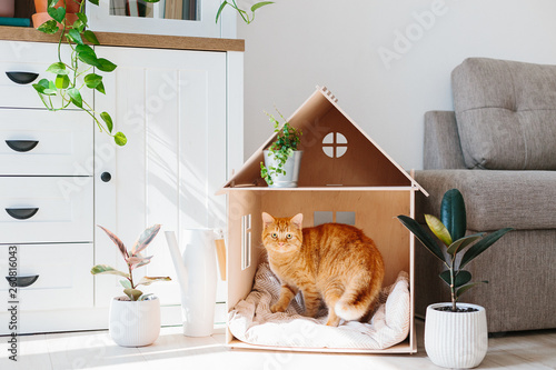 Cat in wooden cat house