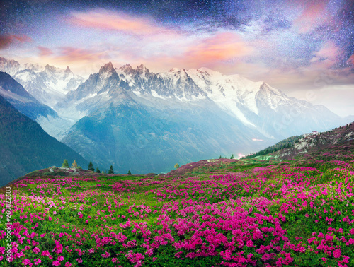 Poster Alpen Alpine rhododendrons on the mountain fields of Chamonix