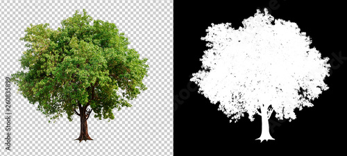 single tree on transparent picture background with clipping path, single tree with clipping path and alpha channel on black background - 260835899