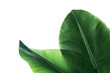 canvas print picture - Fresh green banana leaves on white background, top view. Tropical foliage