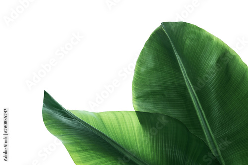 Pinturas sobre lienzo  Fresh green banana leaves on white background, top view