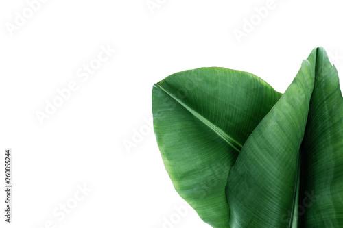 Fototapeta Fresh green banana leaves on white background, top view. Tropical foliage obraz