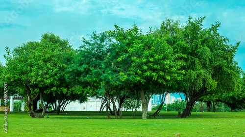 Poster Turquoise trees in the park