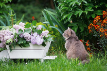 Gray Domestic Cat And Spring L...
