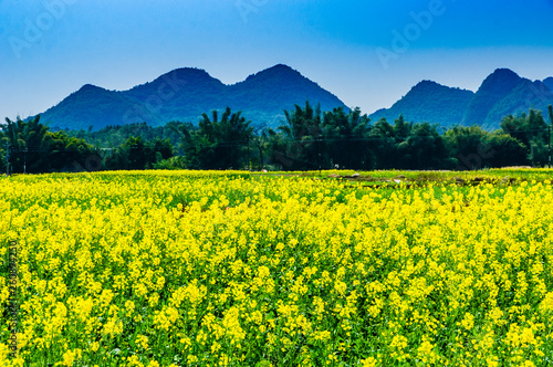 Poster Jaune Countryside scenery with blue sky background