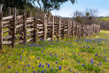 Flowers In Hill Country On Wil...