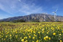 Desert Dandelion Blooming In S...