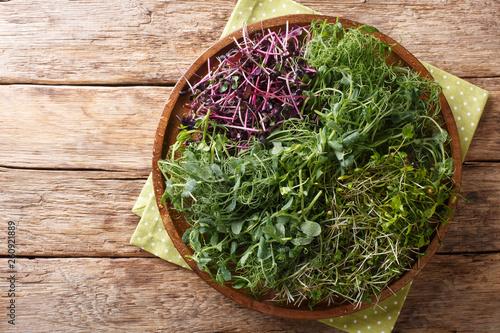 Pinturas sobre lienzo  Homemade fresh microgreen from peas, cilantro, mustard, radish close-up on a plate