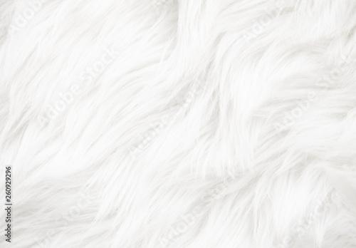 Fotografering White fur texture