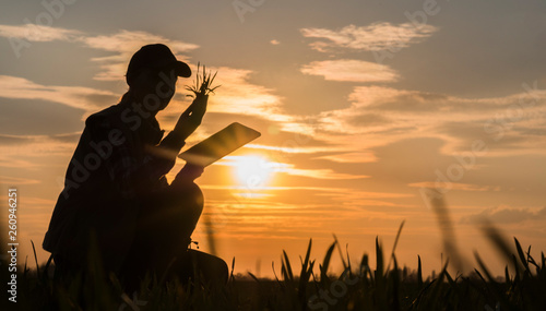 Fototapeta Young woman farmer studying the seedlings of a plant in a field, using a tablet obraz