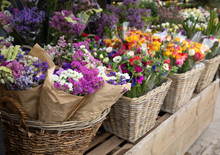 Everyday Flowers Counter With Variety Of Fresh Cut Flowers Such As Statice Salem Or Limonium Sinuatum, Anemone Coronaria, Persian Buttercups For Your Interior Decor At The Greek Garden Shop.