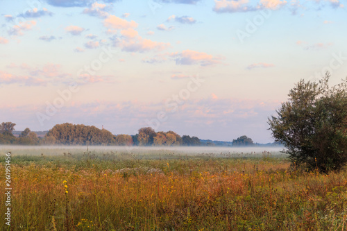 Tuinposter Baksteen Summer landscape with green misty meadow, trees and sky. Fog on the grassland