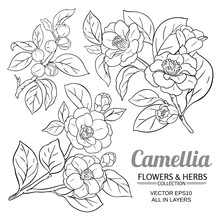 Camellia Vector Set