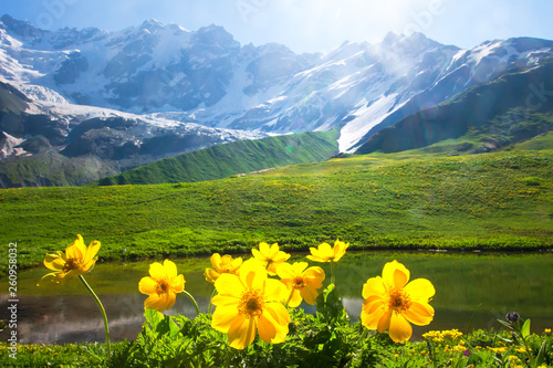 Fotografie, Obraz Alpine mountain landscape with yellow flowers on foreground on sunny bright day