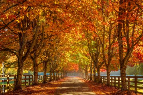 Valokuva Autumn In The Park