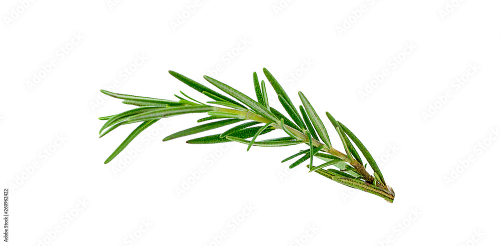 Fototapety, obrazy: Fresh green sprigs of rosemary isolated on a white background
