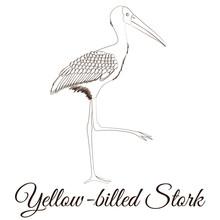 Yellow Billed Stork Cartoon Bird Coloring