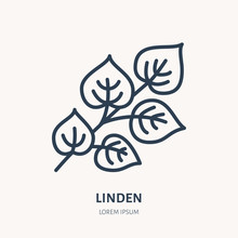 Linden Flat Line Icon. Medicinal Plant Leaves Vector Illustration. Thin Sign For Herbal Medicine, Tree Branch Logo