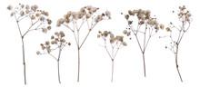 Flat Pressed Dried Flower Patt...