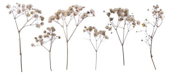 flat pressed dried flower pattern babybreath flower