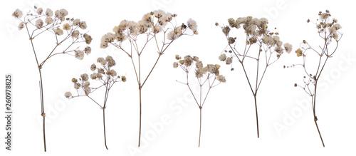 Fotografía flat pressed dried flower pattern babybreath flower