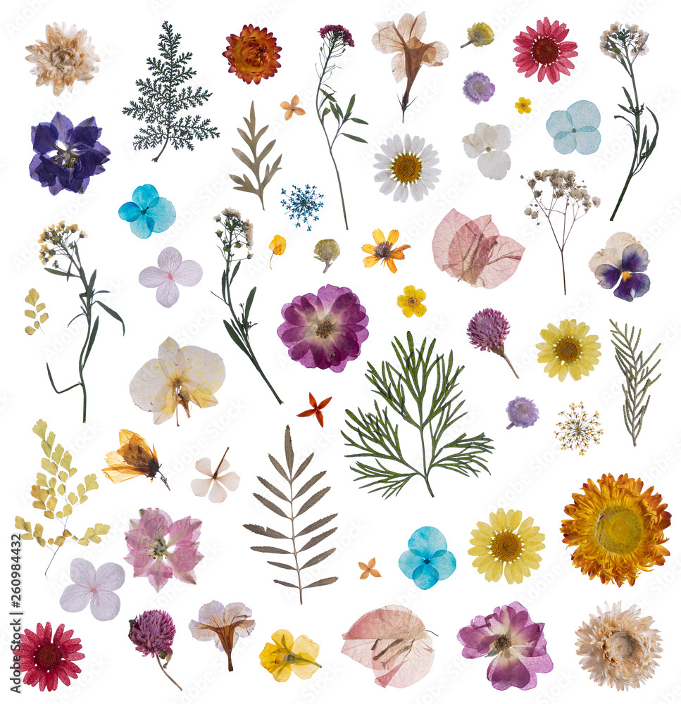 Fototapeta flat pressed dried flower pattern isolated on white background