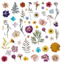 Flat Pressed Dried Flower Patt...