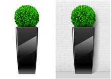 Bush Plant In Modern Black Pot