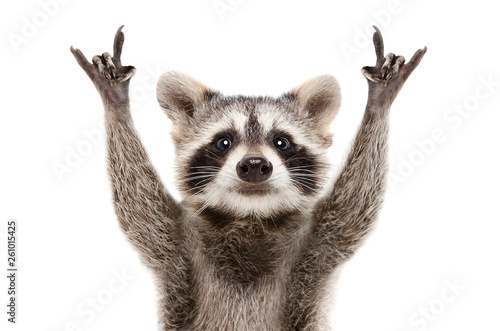 Fotobehang Natuur Portrait of a funny raccoon showing a rock gesture isolated on white background.JPG