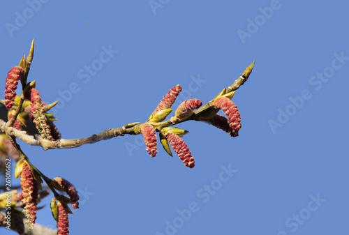 Fotografie, Obraz  joli bouton floral