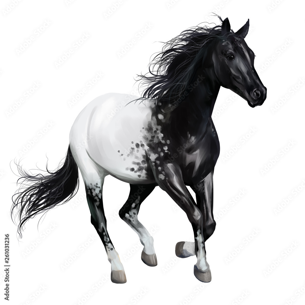 Fototapety, obrazy: Black and white horse. Watercolor drawing