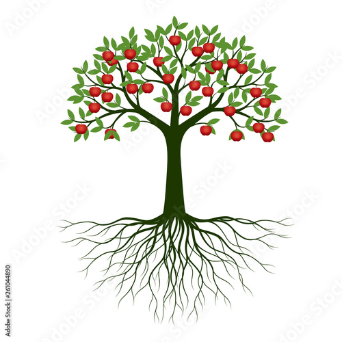 Fotografia, Obraz Green Spring Tree with Roots and fruits. Vector Illustration.