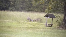Two White Tail Buck Spar Or Fi...