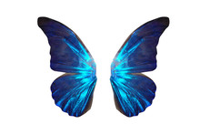 Tropical Butterfly Wings Isola...