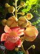 blühende Orchidee