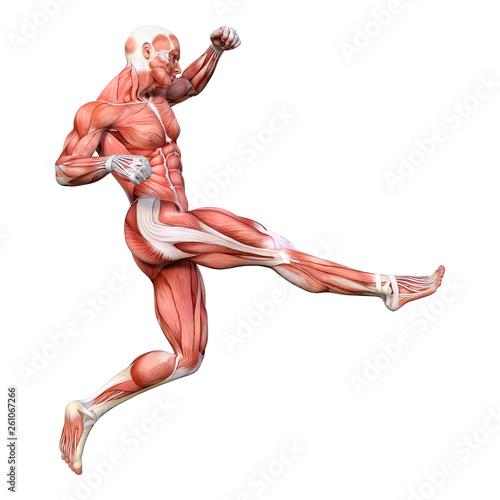 Fotografía 3D Rendering Male Anatomy Figure on White