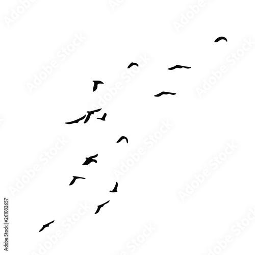 Photo Stands Bird Birds
