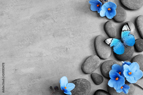 Blue flower and stone zen spa on grey background Canvas Print