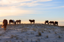 Wild Horses On Sand Dune