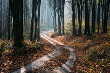 Winding Forest Autumn Road