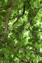 Light Shining Through Green Canopy