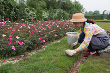 Female Asian Florist Working In The Garden