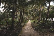 Way Through The Palms