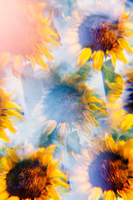 Sunflowers Photographed Using A Prism Filter